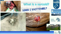 What is an Equine Sarcoid and How Can It Be Managed?