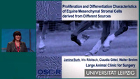 Growth and Differentiation of Equine MSC from Different Sources