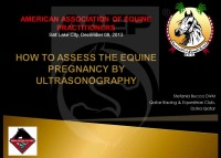 How to Assess the Equine Pregnancy by Ultrasonography