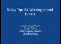 Safety Tips for Working Around Horses