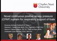 Novel Continuous Positive Airway Pressure System for Respiratory Support of Foals