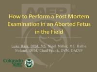 How to Perform a Postmortem Examination of an Aborted Fetus in the Field