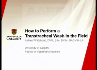 How to Perform a Transtracheal Wash in the Field