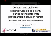 Cerebral and Brainstem Electrophysiological Activity During Euthanasia With Pentobarbital Sodium in Horses