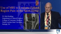 Use of MRI to Evaluate Fetlock Region Pain in the Sport Horse