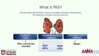 Kidneys Inside and Out: Polycystic Kidney Disease