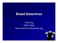Breed Detectives: Identifying Breed Mixes Through Looks and Behavior