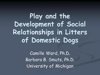 Play and the Development of Social Relationships in Litters of Domestic Dogs
