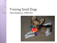Training Small Dogs