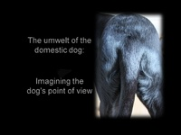 General Session: The Umwelt of the Domestic Dog: Imagining the Dog's Point of View
