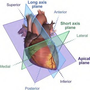 Performing a Comprehensive Transthoracic Echocardiographic Examination in Adults: Recommendations from the American Society of Echocardiography