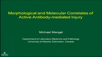 Morphological and Molecular Correlates of Active Antibody-mediated Injury