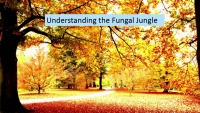 S10: CLIN-INF/MIC: Beyond ABPA: Understanding the Fungal Jungle in CF