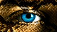 The Reverse Reptile: Turning the Table on Plaintiff's Counsel