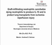 2016: CONCURRENT SESSION 13: Philip K. Caves Award Candidate Presentations -- Graft-Infiltrating Neutrophils Cannibalize Dying Neutrophils to Produce IL-10 and to Protect Lung Transplants from Ischemia-Reperfusion Injury