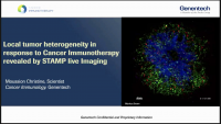 Short Talk: Local Heterogeneity of Response to CIT: Learning from the STAMP Live Imaging Model