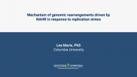 Mechanism of genomic rearrangements driven by NAHR in response to replication stress