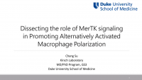 Short Talk: Dissecting the Role of MerTK Signaling in Promoting Alternatively Activated Macrophages Polarization