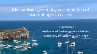 Mechanisms Governing Accumulation of Macrophages in Cancer
