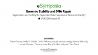 Replication and Cell Cycle Dependent Mechanisms of Genome Stability