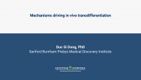 Mechanisms driving in vivo transdifferentiation