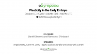 Plasticity in the Early Embryo