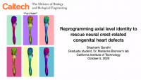 Short Talk: Reprogramming Axial Level Identity to Rescue Neural‑Crest‑Related Congenital Heart Defects