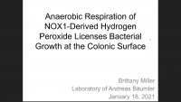 Short Talk: Anaerobic Respiration of NOX1‑Derived Hydrogen Peroxide Licenses Bacterial Growth at the Colonic Surface icon