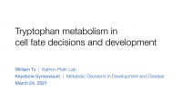 Short Talk: The Role of Tryptophan Metabolism in Cell Fate Decisions and Development