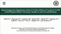 "Short Talk: The α1-Na/K-ATPase/Src-p/PI3K Pathway Modulates the Survivin-SMAC Apoptotic ""Switch"" in NASH Related Hepatocellular Carcinoma: A Translational Study"