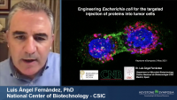Engineering E. coli for the Targeted Injections of Proteins into Tumor Cells