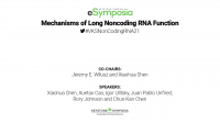 Mechanisms of Long Noncoding RNA Function icon