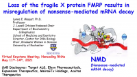 Loss of Fragile X Protein Results in Misregulation of Nonsense-Mediated mRNA Decay icon