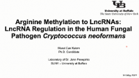 Short Talk: Long Noncoding RNA Regulation in Human Fungal Pathogen Cryptococcus neoformans icon