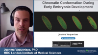 Chromatin Conformation during Early Embryonic Development
