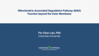 Mitochondria-Associated Degradation Pathway (MAD) Function beyond the Outer Membrane