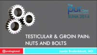 Testicular & Groin Pain: Nuts and Bolts