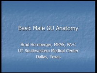 Basic Male Anatomy