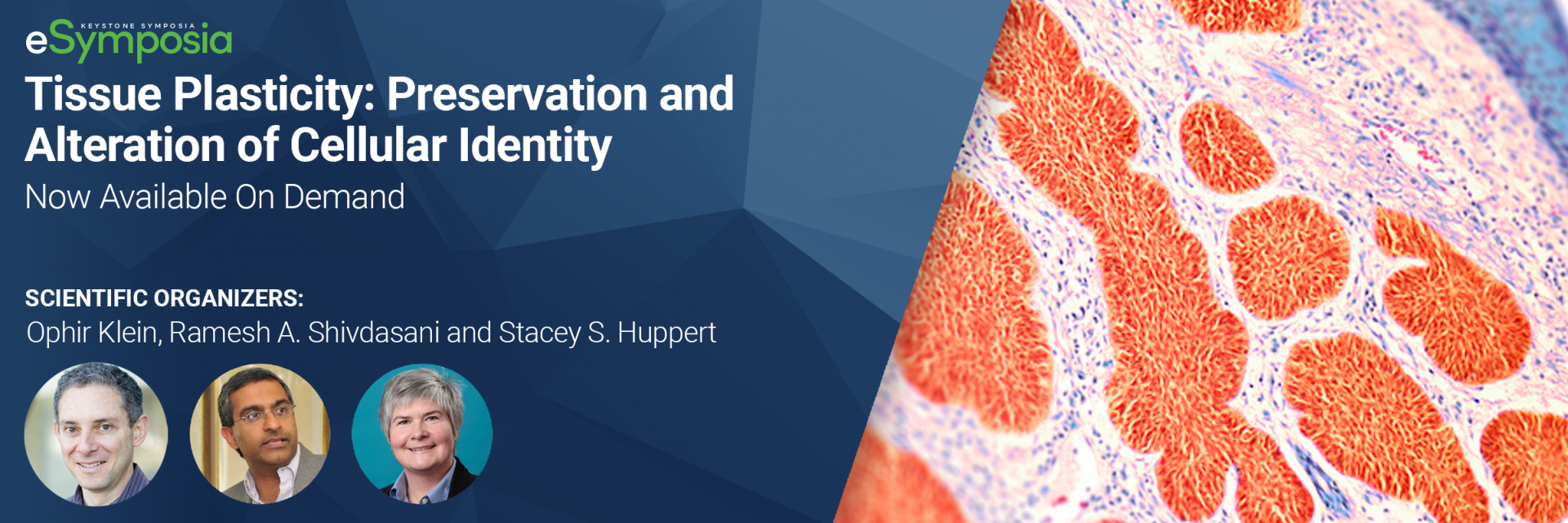 Tissue Plasticity: Preservation and Alteration of Cellular Identity